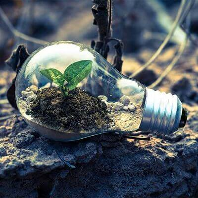 Dirt and budding plant in light bulb on the ground